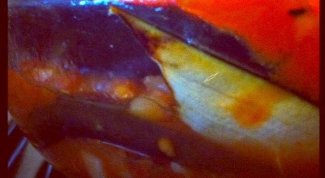 Dietitian UK: Aubergine Bake