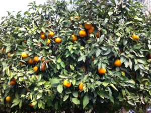 Dietitian UK: Orange Tree