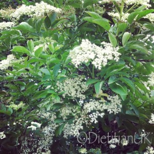 Dietitian UK: Elderflowers