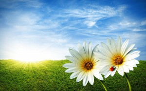 Dietitian UK: Spring Clean your Body