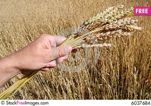 Dietitian UK: wheat