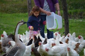 "Dietitian UK: Feeding the birds at ""Le Vay"""