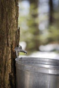 Dietitian UK: Plant Waters