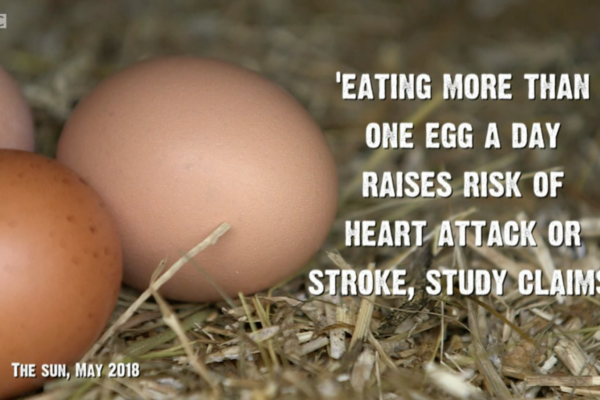 Are Eggs Safe?